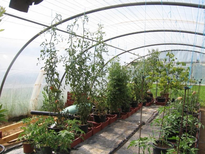 tomates 2012 de jeannot le suivi de vos semis 2012